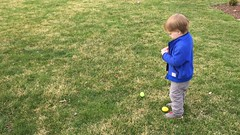 "Paul hunts for eggs at Grandma and Grandpa Morton's • <a style=""font-size:0.8em;"" href=""http://www.flickr.com/photos/109120354@N07/26559732491/"" target=""_blank"">View on Flickr</a>"