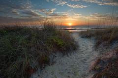 trailps1 (will.mcgalliard) Tags: sunset sun beach st sunrise reeds landscape sand florida dune s atlantic trail learning d750 jacksonville nikkor curve jax augustine luminosity 1635mm jaxbeachpier luminosit surfjaxbeach