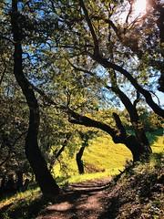 A trail on North Sonoma Mountain Regional Park (harminder dhesi photography) Tags: california park trees sun nature landscape outdoors spring shadows view hiking sonoma trail bayarea sonomacounty norcal santarosa k3 vsco snapseed vscocam