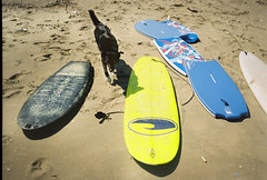 (Gunes Engin) Tags: sea portrait beach dogs sport surf surfer documentary surfing sile seasports konicaeumini