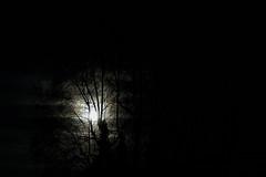 rafz-25122015_18'17_1 (eduard43) Tags: weihnachten fullmoon rarely vollmond 2015 rafz selten