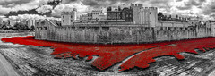 In memory (ShimmyGraphy) Tags: red bw panorama white black color rot london tower art tom ceramic paul blood war key kunst first historic explore memory poppies piper lands swept cummins seas remembers erinnerung erster keramik mohn 2014 weltkrieg colorkey mohnblume colorkeying mohnblumen schwarzweis colourkeying historsch shimmygraphy