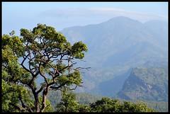 rDSC_1423 (Indianature st2i) Tags: india december tea tamilnadu westernghats teaestate 2016 2015 valparai indianature anamalais indiragandhiwildlifesanctuary anamallais anamalaitigerreserve