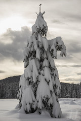 Put A Bird On It... (Joshua Johnston Photography) Tags: trees winter snow bird nature oregon pacificnorthwest pnw trilliumlake treeporn canonef2470mmf4lisusm canon6d joshuajohnston