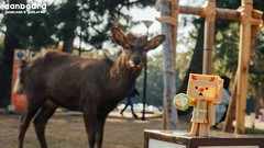 (janetcmt's pictures) Tags: deer nara 奈良 danbo 鹿 danboard 紙箱人