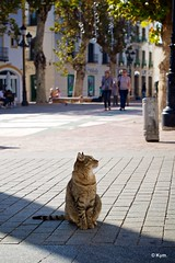 Kitty (Kym.) Tags: cat walking spain walk kitty andalusia nerja thegang andalucia otherpeoplesgang plazaiglesianerja