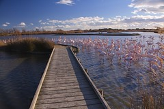 Camargue, Flamingoes, France. (IAGD+P) Tags: pink horses france flamingoes flamingo pinkflamingos flamandrose chevaux camargue saintesmariesdelamer lessaintesmariesdelamer chevauxcamarguais