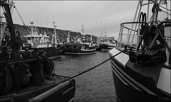 Shelter (North Light) Tags: weather coast scotland harbour gale fishingboats caithness trawlers scrabsterharbour