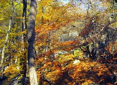 Fairy scene of light and colour (Stella VM) Tags: autumn trees light mountain colour forest landscape scene fairy bulgaria  vitosha
