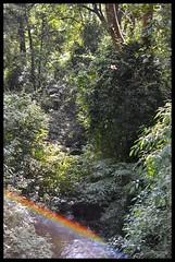 Surprise Rainbow in Forest Stream (Indianature st2i) Tags: india rainbow stream december tea tamilnadu westernghats teaestate 2016 2015 valparai indianature sholaforest anamalais indiragandhiwildlifesanctuary anamallais anamalaitigerreserve