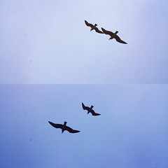 two paper airplanes flying (nowimhaunted) Tags: blue sky seagulls freedom fly wings blu lisboa lisbon flight ali uccelli volo cielo gabbiani lisbona volare