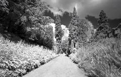 Brodsworth Hall Garden (pho-Tony) Tags: black color film rollei 35mm ir hall cosina voigtlander bessa snapshot ishootfilm filter 400 infrared l analogue 135 rodinal 72 bessal f4 25mm hoya skopar englishheritage 720 voigtlanderbessal brodsworth brodsworthhall 720nm ir72 filmisnotdead hoyair72 ro9 rolleiinfrared400s
