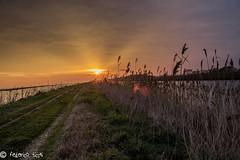 Passaggio (Federico Ticchi) Tags: sunset italy sun color green art nature lights italia tramonto natura erba di luci ferrara sole colori comacchio valli