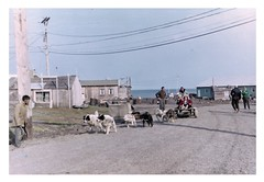 Dogsled Ride (Fleur-de-louis) Tags: ocean city dog alaska point village ride north ak arctic riding 1968 eskimos sled slope barrow eskimo dogsled northernmost