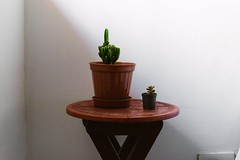 Friends (Brenda C.) Tags: room succulents suculent crasas