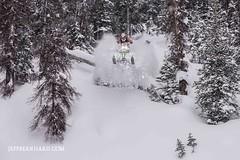 arctic cat pounces for the kill (Jeff Bernhard) Tags: cat drop arctic pillow snowmobiling togwotee