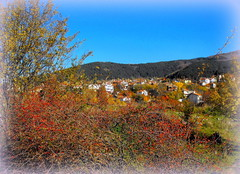 Colourful autumn (Stella VM) Tags: autumn mountain landscape village bulgaria  rosehip vitosha       murchaevo