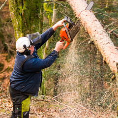 woodwork! (grahamrobb888) Tags: trees forest woods forestry perthshire chainsaw 85mm machinery nikkor f18 treefelling birnamwood nikond800