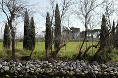 trees2 (lux fecit) Tags: trees rocks venezia cypresses torcello