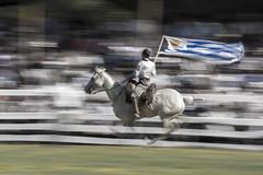 El vertigo de la vuelta de honor (jorge_n_lopez) Tags: caballo uruguay movimiento jinete patria gaucha galope barrido sudamrica amricadelsur ruedo tacuaremb patriagaucha jineteadas