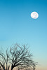 Natural Satellite (Kash Khastoui) Tags: moon tree nature set sunrise landscape photographer satellite sony australia 55mm nsw outback fe za tamworth kash khashayar a7r breeza khastoui