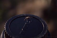 Spider on Lens (chundarboy) Tags: field canon lens spider experimental grain fo depth 60d