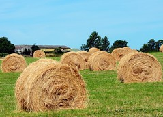 Roll on summer (gillybooze) Tags: sky building tree field grass architecture farm country vista hay bales allrightsreserved