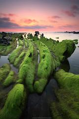 PIENSA EN VERDE (Obikani) Tags: sunset sea seascape color green beach lines coast seaside long exposure shore bizkaia basquecountry barrika biscay flysch canonikos