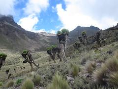 IMG_0934 (John Steedman) Tags: africa trek kenya afrika kenia afrique eastafrica mountkenya ostafrika     afriquedelest