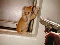 Cat Holding Hands Up Gun Pointing At Her (rapidace) Tags: dog pet cats baby pets cute dogs animal animals cat puppy kitten funny