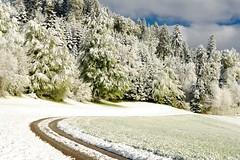 April in Switzerland (balu51) Tags: morning schnee sky cloud cold tree forest landscape switzerland spring meadow wiese himmel wolken grau april 60mm grn kalt landschaft wald weiss bume morgen feldweg frhling acker morningwalk 2016 morgenspaziergang waldrand wintereinbruch itsnowedagain copyrightbybalu51