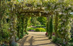 Welcome to May (paulapics2) Tags: flowers lake beautiful garden spring pretty arch blossom blumen canon5d wisteria frhling whitewisteria hydehallgardens
