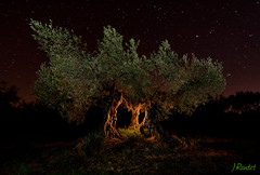 Origen (jrandet) Tags: longexposure nightphotography espaa lightpainting landscape arbol huesca cielo estrellas nocturna olivo largaexposicion fotografianocturna fotografiacreativa jrandet
