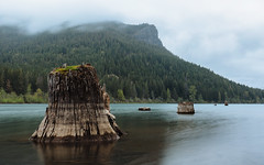 Timelines (John Westrock) Tags: longexposure nature clouds landscape pacificnorthwest washingtonstate stumps rattlesnakeledge rattlesnakelake canoneos5dmarkiii johnwestrock canonef1635mmf4lis