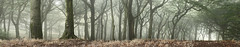 A Tree Scene (seegarysphotos) Tags: morning autumn trees mist fairytale forest woodland wonderful landscape outdoors weird early sticks woods pano branches ground panoramic spooky oldham leafs magical garylewis manchetser royton tandlehillspark seegarysphotos