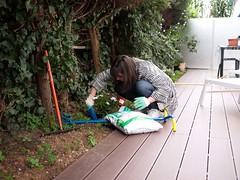 Jardinage (Dahrth) Tags: baby garden lumix raw gardening jardin littleboy bb gf1 petitgaron micro43 panasoniclumixgf1 20mmpancake gf120 microquatretiers