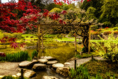 Almost (KPortin) Tags: seattle japanesegarden maple pond wisteria
