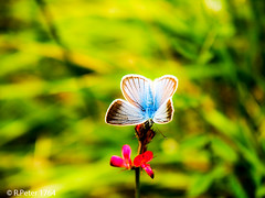 butterfly blue (R-Pe) Tags: show camera abstract canon photo nikon foto fotografie photographie sony picture pic exhibition peter gift bild geschenk ausstellung aufnahme melancholie 1764 rpe rbi 1764org www1764org