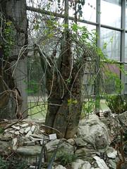 Palmengarten Frankfurt (fchmksfkcb) Tags: castle germany deutschland hessen frankfurt botanicalgarden palmengarten taunus frankfurtammain burg frankfurtmain hesse ffm burgruine botanischergarten hessia castleruin oberreifenberg
