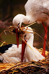 DSC_6284 (GoWithLifeEye) Tags: love beautiful loving amazing couple stork