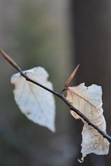 Jennys Jump iii. (miranda.valenti12) Tags: trees tree nature leaves leaf blurry focus crinkled