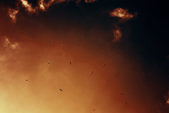Sundown Flight (EEAworkshop) Tags: world travel blue sunset red sky inspiration art nature colors beauty alexandria birds animals clouds dark landscape 50mm flying twilight nikon colorful artistic dusk egypt pure longexposures