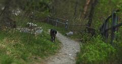 Mastik (bulbocode909) Tags: nature vert arbres printemps chiens sentiers forts