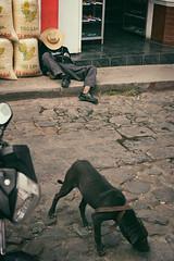 Street Sleep (departing(YYZ)) Tags: street travel people dog outside cowboy sleep guatemala chichicastenango centralamerica