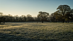 2016 Eades Meadow April - Across The Meadow (Birm) Tags: morning blue trees light sky sunlight green field grass sunrise dawn oak frost meadow frosty worcestershirewildlifetrust eadesmeadow