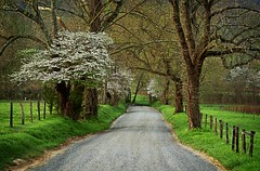 Sparks Lane Smoky Mountains (Alan Amati) Tags: road park usa mountains sunrise dawn early us nationalpark spring tn loop cove tennessee earlymorning calm tenn national lane serene np dogwood smoky sparks townsend smokymountains daybreak cadescove firstlight cades earlylight amati sparkslane alanamati