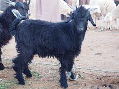 P4162029 (t_y_l) Tags: morocco marokko tinghir suq 2016 tinerhir