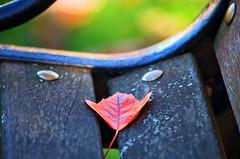 Autumn Seating (mpardo.photo) Tags: autumn bench leaf montebellopark stcatharines cc0 darktable