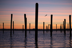 Putting a stake in the ground (BrianEden) Tags: ri morning travel sky color water silhouette sunrise harbor us downtown fuji unitedstates rhodeisland newport fujifilm pylons jamestown ferrylanding xpro1