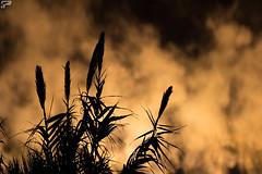 Fear of Pollution (Frank Perrucci) Tags: pollution catanzaro